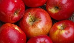 Pommesbis